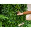 Kép 8/17 - Nortene Vertical Tropic műanyag zöldfal trópusi növényekkel (100x100 cm)