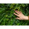 Kép 9/17 - Nortene Vertical Tropic műanyag zöldfal trópusi növényekkel (100x100 cm)