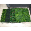 Kép 12/17 - Nortene Vertical Tropic műanyag zöldfal trópusi növényekkel (100x100 cm)