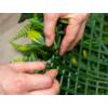 Kép 2/17 - Nortene Vertical Tropic műanyag zöldfal trópusi növényekkel (100x100 cm)