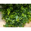 Kép 8/14 - Nortene Vertical Forest műanyag zöldfal az erdő növényeivel (100x100 cm)
