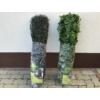 Kép 12/14 - Nortene Vertical Forest műanyag zöldfal az erdő növényeivel (100x100 cm)