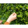 Kép 6/14 - Nortene Vertical Forest műanyag zöldfal az erdő növényeivel (100x100 cm)